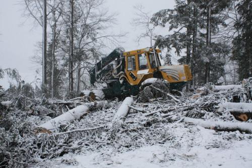 Forstmaschine im Einsatz bei Neuthal, © DVZO, Lukas Trüb